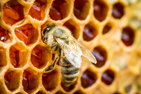 Vente du miel communal à la mairie les 14 et 17 février