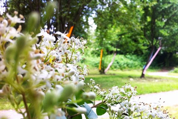 Semaine européenne du développement durable au Jardin Sauvage du 30 mai au 5 juin
