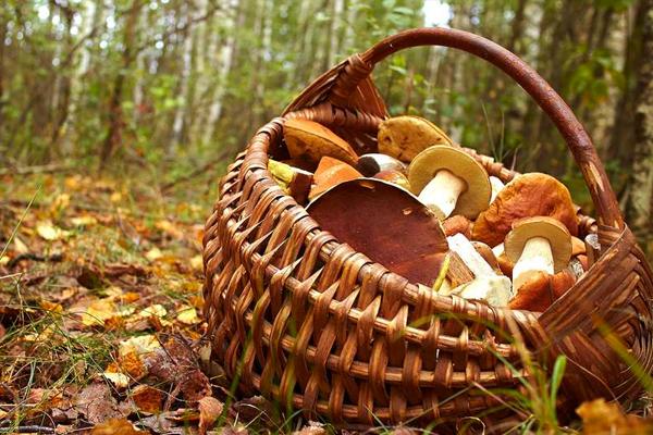 1,2,3 BOUGEZ Sortie champignons - Mercredi 3 octobre - ANNULÉE