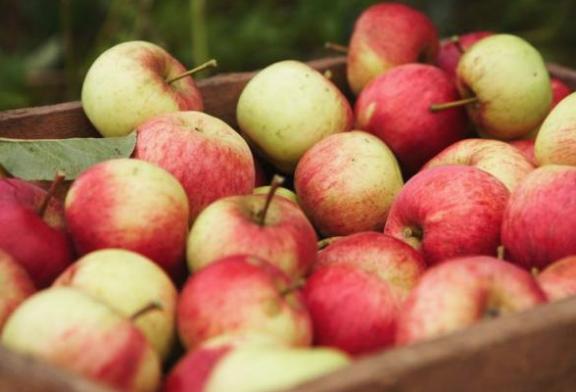 Fête de la pomme – Samedi 13 octobre – Maison du parc à Pourcy