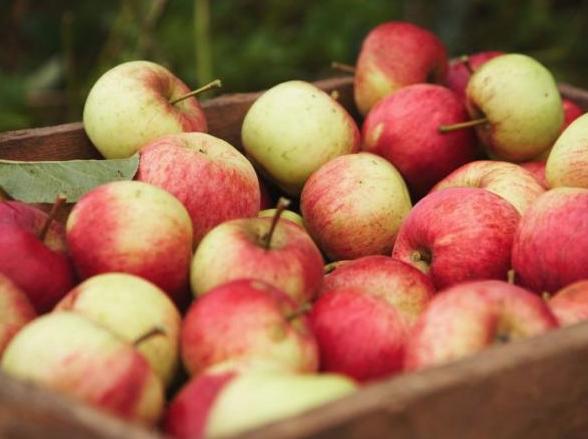 Fête de la pomme - Samedi 13 octobre - Maison du parc à Pourcy