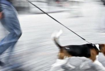 Amis des chiens : un peu de civilité