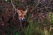 Un Monde En moi – Ateliers de pistage animalier – Dim 9 fév
