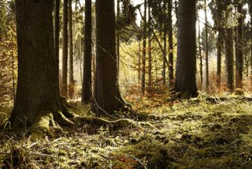 Projet de Programme régional de la forêt et du bois 2018-2027