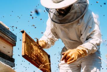 Visite du rucher communal <br>Ouvert à tous <br>Samedi 21 septembre