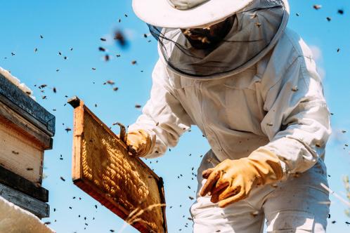 Vente de miel du rucher communal - samedi 3 octobre