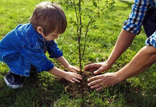 """Opération """"100 arbres pour mon village"""" <br>Samedi 14 décembre"""