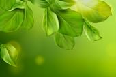 Sillery obtient le label « Commune Nature 3 libellules »