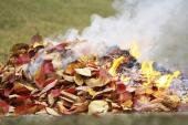 Interdiction de brûler des déchets verts dans son jardin